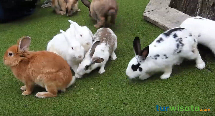 Kelinci Rabbit Forest